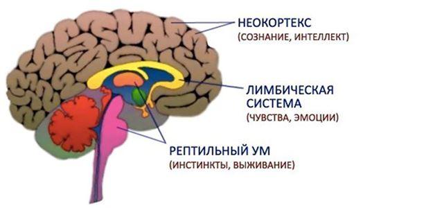 Исполнение желаний - триединый мозг